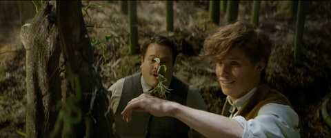 fantastic_beasts_and_where_to_find_them_5